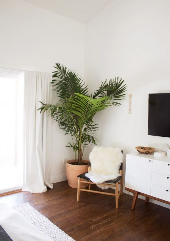 decorar plantas interior